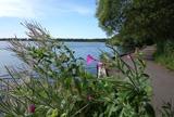 Salg af liebhaverejendomme i Nordsjælland og Birkerød